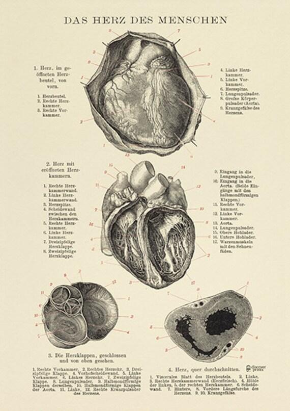 Die menschlichen Herzens Archiv Print Herz Herz-Poster | Etsy