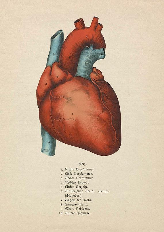 Die menschlichen Herzens Archiv Print antiken Stil Herz | Etsy