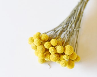Dried Billy Balls, Craspedia Bunch, Drumstick Flower, Yellow Flowers, Dry Floral, Wedding Bouquet, Modern, Country Rustic Floral Arrangement