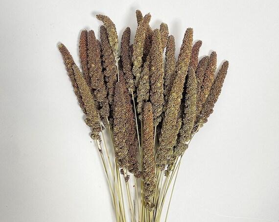 Highlander Millet, House Decor, Millet, Preserved Flowers, Filler, Green, Wedding Filler, Natural, Country, Dried Flowers