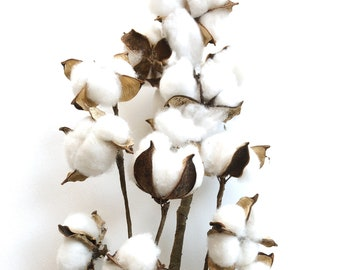 "30"" Cotton Stems, Cotton Balls, Branches, Bunch, Wedding, Rustic, Country, DIY, Flowers, Floral Arrangement, 2nd Anniversary, Farmhouse"