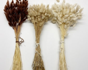Bunny Tails, Preserved Flowers, Largurus, Dried Largurus, Bunny Tail Grass, Brown, White, Natural, Soft Flowers, House Decor, Wedding Decor