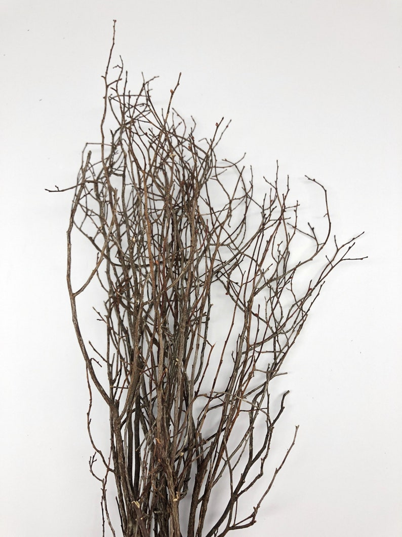 Sweet Huck Thin Branches Dried Preserved Flowers Wedding Etsy