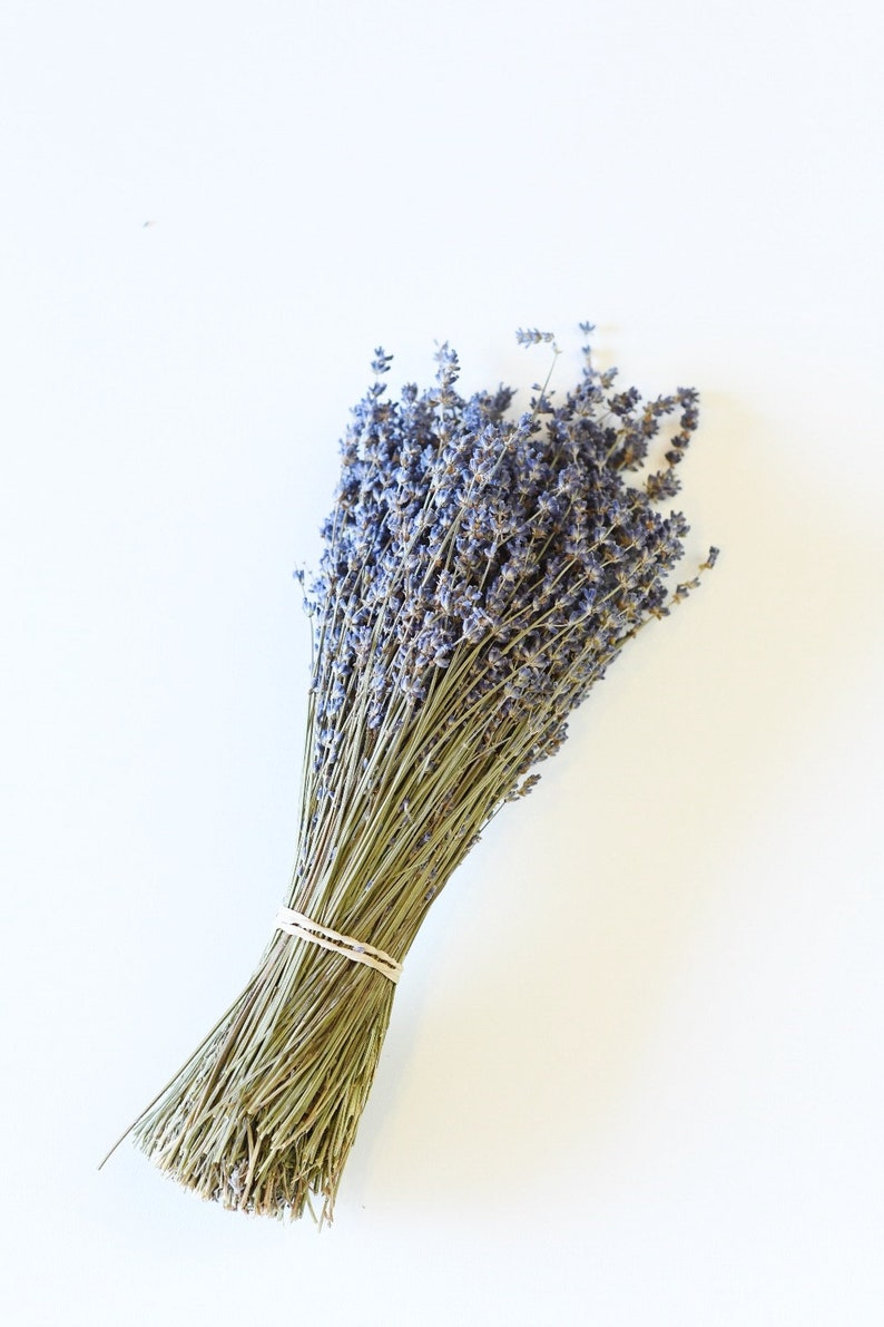 250 Stems Lavender One Bunch Preserved Dry English Dry image 0