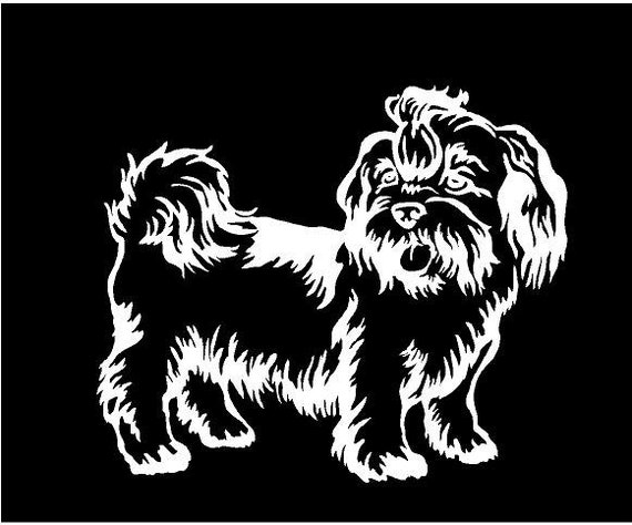 Shih Tzu Light