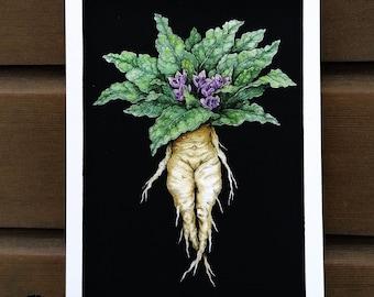 Mandragore - illustration drawing print A5