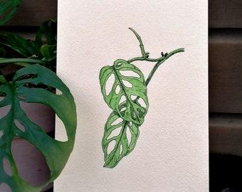 Monstera Acuminata - illustration drawing print