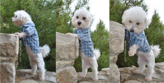 Dog Shirt Pattern size XXL Dog Clothes Sewing Pattern Dog | Etsy