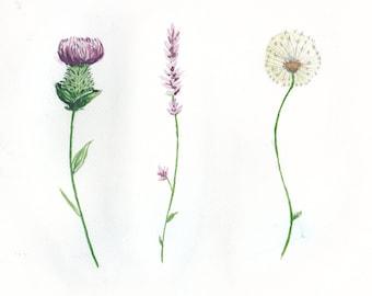 Botanicals - Thistle Lavender and Dandelion Postcard Print