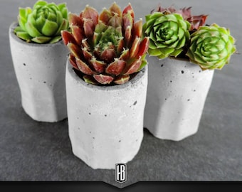 """Set of 3 """"PlantShots small"""" in concrete with succulents"""