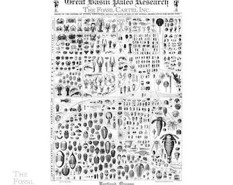 Vintage Replica Trilobite Poster