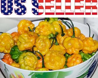EXTREME SUPER HOT! 5 Trinidad Morovars Yellow Chili seeds