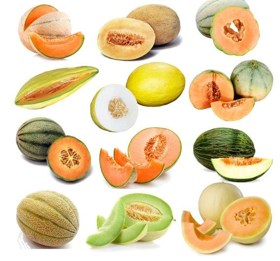 50 Organic Orange Flesh Honeydew Melon Seeds USA Seller Non GMO Harvested in US
