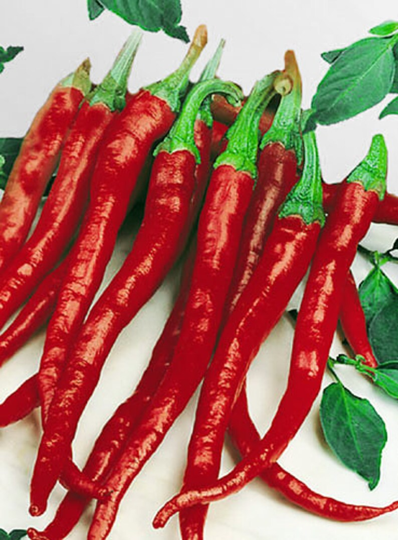 Pepper Cayenne Long Red Slim 30 Seeds Free Ship!