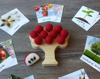 Life Cycle of an Apple Tree, Ten Frame, Life Science, Kindergarten Math, Waldorf, Montessori