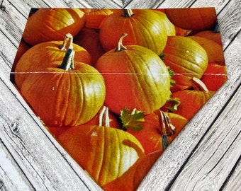 Fall Pumpkins Dog Bandana
