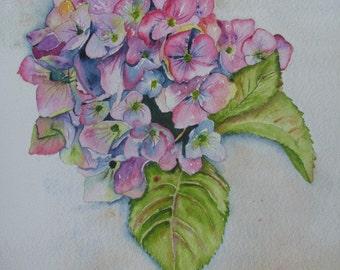 8 X 10 Pink Hydrangea Print