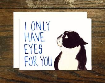 Boston Terrier Valentines Day Love Card