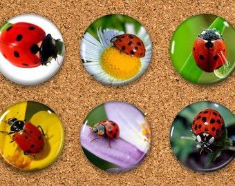 """Ladybug Thumbtacks, Ladybird Push Pins, Ladybug Magnets, 6 thumbtacks for corkboard, 6 Magnets for Magnetic Whiteboards or fridge 1"""" size"""