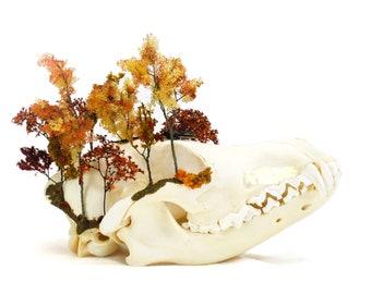 Taxidermy Healing Crystals Terrarium Amethyst Oddities Curiosities skull Aqua Aura Spring Turtle Skull Island Wicca Bone Art