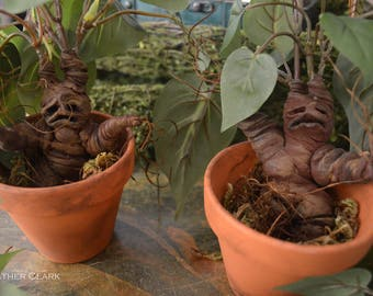 Harry Potter Mandrake Plants
