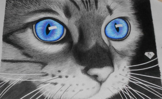 Beautiful Cat Drawing Big Blue Eyes Special Edition Only 50 Etsy