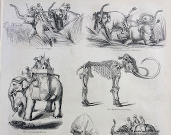 1856 Large Original Antique Engraving - Elephants: Riding Elephants, Mammoth Skeleton, Swimming, Hunters - Wildlife Wall Decor