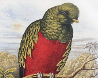 1880 Beautiful Trogon Original Antique Matted Chromolithograph - Ornithology - Bird Decor - Wildlife - Decorative Art