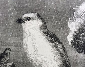 1893 Snow Bunting Couple Original Antique Matted Engraving - Ornithology - Birds - Sweet Bird Print - Victorian Decor