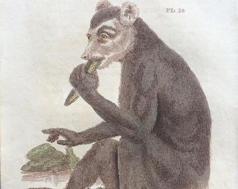 1811 Original Antique Hand-Coloured Engraving - Indri - Babakoto - Wildlife - Wall Decor - Zoology - Decorative Art - Natural History
