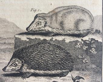 1775 Original Antique Copper Engraving - Hedgehog - Count de Buffon - Wall Decor - Zoology - Decorative Art - Natural History