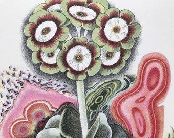 1939 Green Edged Auricula Original Vintage Print - Mounted and Matted - Botanical Illustration - Flower Art - Retro Decor - Available Framed