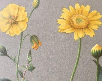1886 Original Antique Botanical Illustration - Vintage Flower Print - Decorative Wall Art - Mounted and Matted - Available Framed