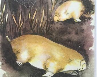1956 Marsupial Mole Original Vintage Illustration - Australia - Wildlife Decor - Mounted and Matted - Available Framed