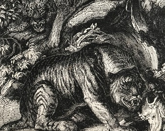 c.1860 Original Antique Print - The Tiger and the Leopard - Wildlife - Natural History - Mounted and Matted - Available Framed
