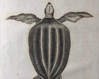 1812 Coriaceous Tortoise Original Antique Engraving - Reptile - Turtle - Vintage Wall Decor - Available Framed