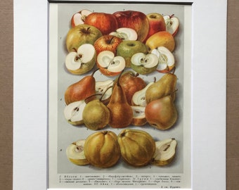 1959 Pears and Apples Original Vintage Print - Mounted and Matted - Retro Wall Art - Fruit - Kitchen Decor - Available Framed