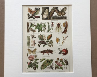 1924 Garden Pests Original Antique Lithograph - Mounted and Matted - Insect Art - Gardening - Vintage Wall Decor - Available Framed