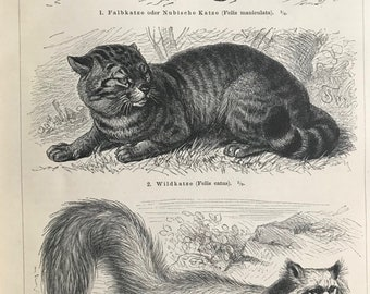1897 Cats Original Antique Print - Mounted and Matted - Angora Cat - Wild Cat - Nubian Cat - Wildlife Decor - Available Framed