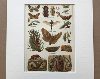 1924 Forest Pests Original Antique Lithograph - Mounted and Matted - Insect Art - Farming - Vintage Wall Decor - Available Framed