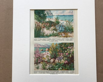 1924 Coastal Plants Original Antique Lithograph - Mounted and Matted - Botanical Art - Beach Decor - Vintage Wall Decor - Available Framed