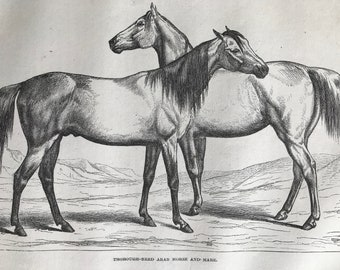 c.1860 Thoroughbred Arab Horse and Mare Original Antique Print - Equine Decor - Racehorse - Mounted and Matted - Available Framed