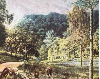 1940s Trossachs - Wooded Glen Original Vintage Print - Perthshire - Scotland - Mounted and Matted - Available Framed