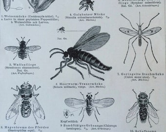 1897 Flies Original Antique Print - Mounted and Matted - Fly - Insect - Entomology - Wildlife Decor - Available Framed