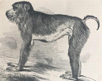 Mammals & Marsupials