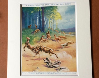1930s A Scene from the Evolution of the Horse Original Vintage Print - Mounted and Matted - Available Framed - Wildlife Decor