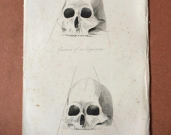 1855 Skull Cranium Comparison - Esquimaux and skull found in Ancient Tomb near Niagara Original Antique Engraving - Anthropology