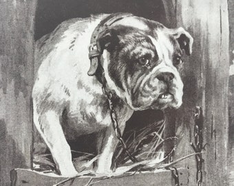 1925 'Who Goes There' Dog Illustration Original Vintage Print - Dog - Animal Art - Mounted and Matted - Available Framed