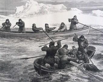 1877 The Pandora Arctic Expedition: Walrus-Shooting Original Antique Engraving, Illustrated London News, 19th Century History