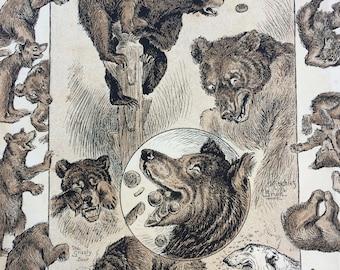 1888 Bears Original Antique Lithograph - Wildlife Decor - Wall Decor - Home Decor - Bear - Boys Own Paper